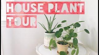 fall 2017 house plant tour