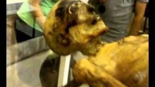 museo egizio torino    mummie