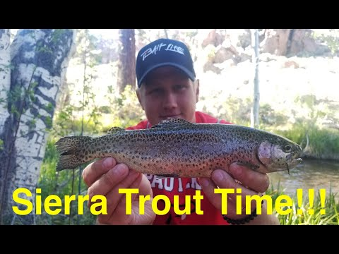 Trout Fishing The Eastern Sierra's Lower Rock Creek