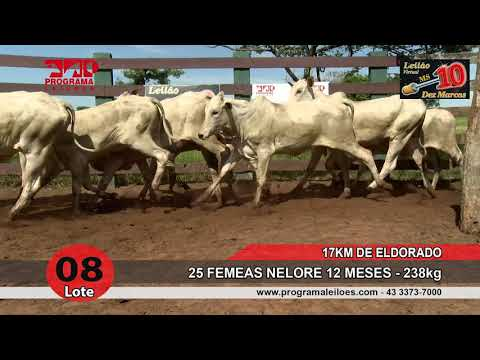 Lote 08
