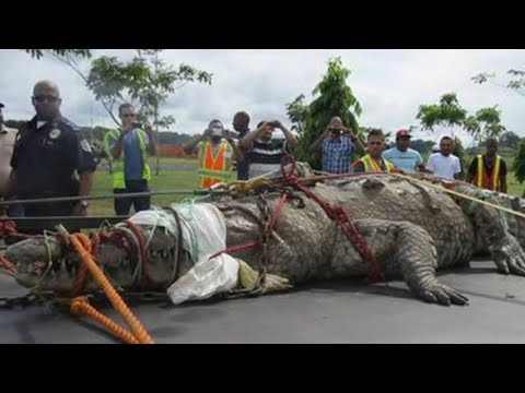 5 Biggest Crocodiles to Have Ever Roamed the Planet!