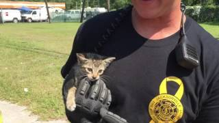 Police and fire department saving a kitten that was stuck in a storm drain