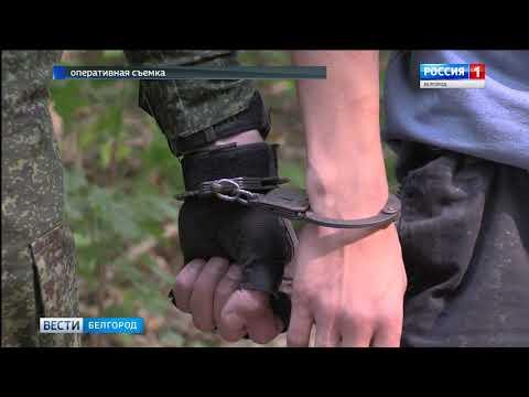 ГТРК Белгород - Пограничники пресекли очередные попытки ввоза нелегального груза