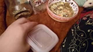 よく「ラットのご飯、何を与えていますか?」と聞かれるので動画を撮っ...