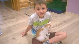 Котенок-рыжий ребенок