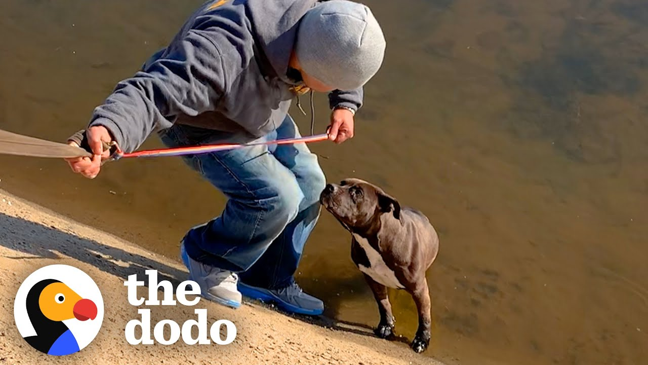 Pittie Rescued from Canal Turns Into a Big Chubby Baby | The Dodo Pittie Nation
