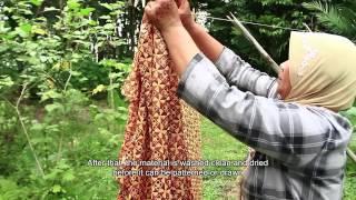 Lawe Pewarna Alam - Lawe Natural Dye