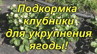 Клубника- чем её подкормить во время цветения?