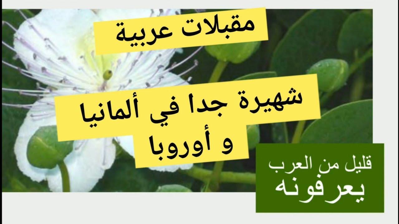 مقبلات و منشط عربي يباع بألمانيا وأوربا ولايعرفه العرب .. نصيحة جربه