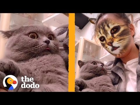 These Cats Don't Know How To React To This Cat Face Filter   The Dodo   The Dodo
