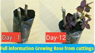 how to grow roses in a potato