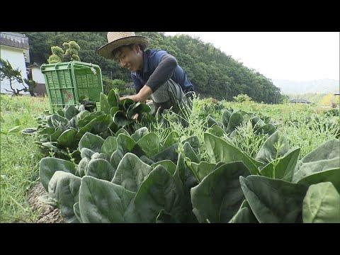 【特集】「農業が楽しい」家業を継いだ25歳の若手農家が奮闘! 香川・まんのう町