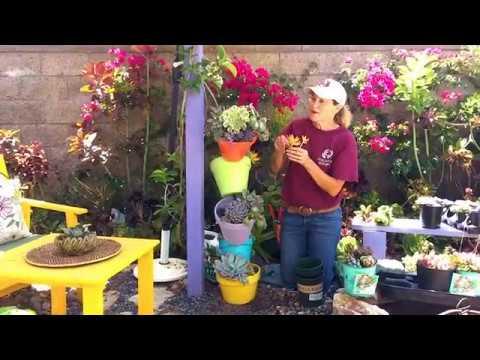 DIY Topsy Turvy Succulent Planter