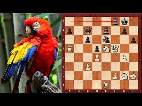 The first official Chess Brilliancy Prize Game! : Henry Bird vs James Mason: 1876 New York