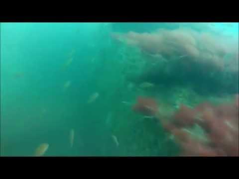 Scuba Diving Barnstable Ledge, Cape Cod MA (HD1080)