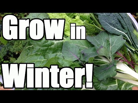 8 Keys to Growing in Winter in an Unheated Greenhouse (Hoop House)