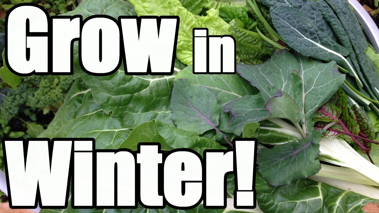 8 keys to growing in winter in an unheated greenhouse hoop house