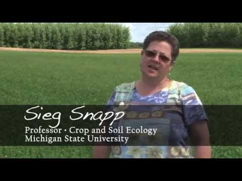 MSU AgBioResearch: Long-Term Ecological Research