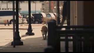 Верный Пёс-Хатико,Ждал своего хозяина 9 лет,история до слёз