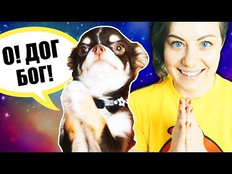 Вопрос: Как обучить собаку командам?