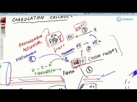 covid-19-insights:-hypercoagulability---part-2-(coagulation-cascade.)