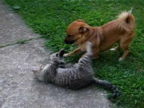 How To Get Cats To Stop Fighting