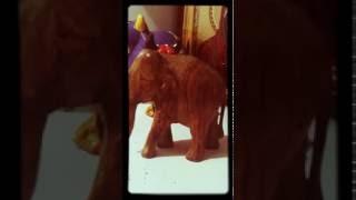 Говно слона