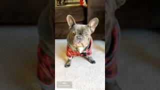 George the frenchie on the weather