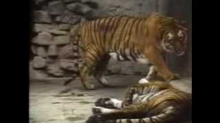 Call of the Wild - Sex in the Zoo