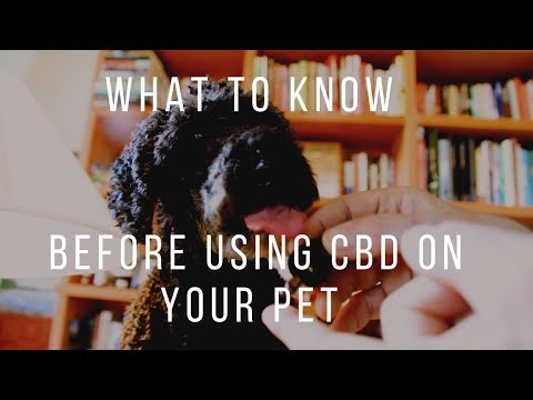 before-giving-cbd-to-your-pets:-know-this