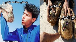 صيد الصقر المسمى ابو الكمل وحش مو صكر طركاعه