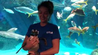 SEA-SPAN Episode 5: Penguins W…