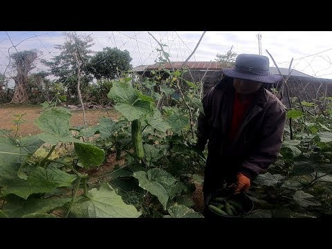 Agriculture Farming in thailand - Asian food
