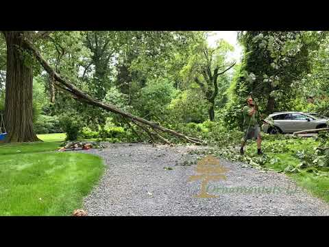 Emergency Tree Limb Removal in Connecticut