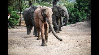 Orphan elephant Shukuru moves to Umani Springs
