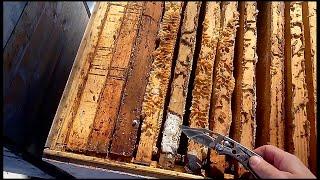!!!!МОЛЬ НЕ ТРОНЕТ РАМКИ, ЕСЛИ...!!! Все Секреты Пчеловодства!!!!!