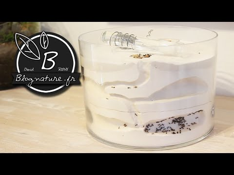 Fabrication d'une fourmilière pour fourmis moissonneuses (Messor) version 2 / Blognature.fr