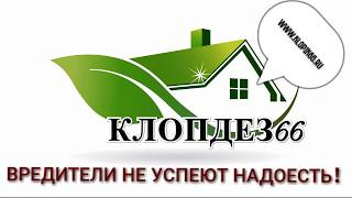 осмотр квартиры перед обработкой от тараканов(, 2017-10-01T17:59:35.000Z)