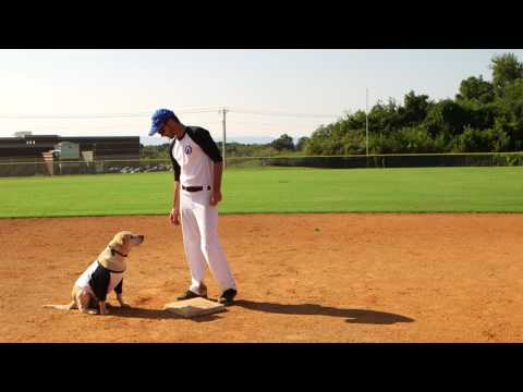 PetSafe® Second Base: Stay