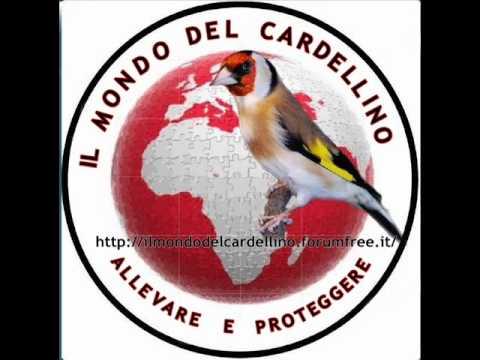 Canto del Cardellino File 1