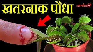 ये पौधा किसी पर भी Attack कर देता है | PLANTS THAT EAT ANIMALS