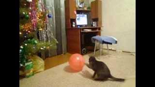Кошка против шарика