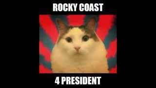 Happy World Cat Day! Rocky 2016