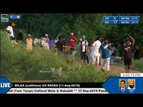 SHIFT 4 🔴 BILGA (Ludhiana) 🔴 OX RACES - ਬਲਦਾਂ ਦੀਆਂ ਦੌੜਾਂ [11th-Aug-2019]
