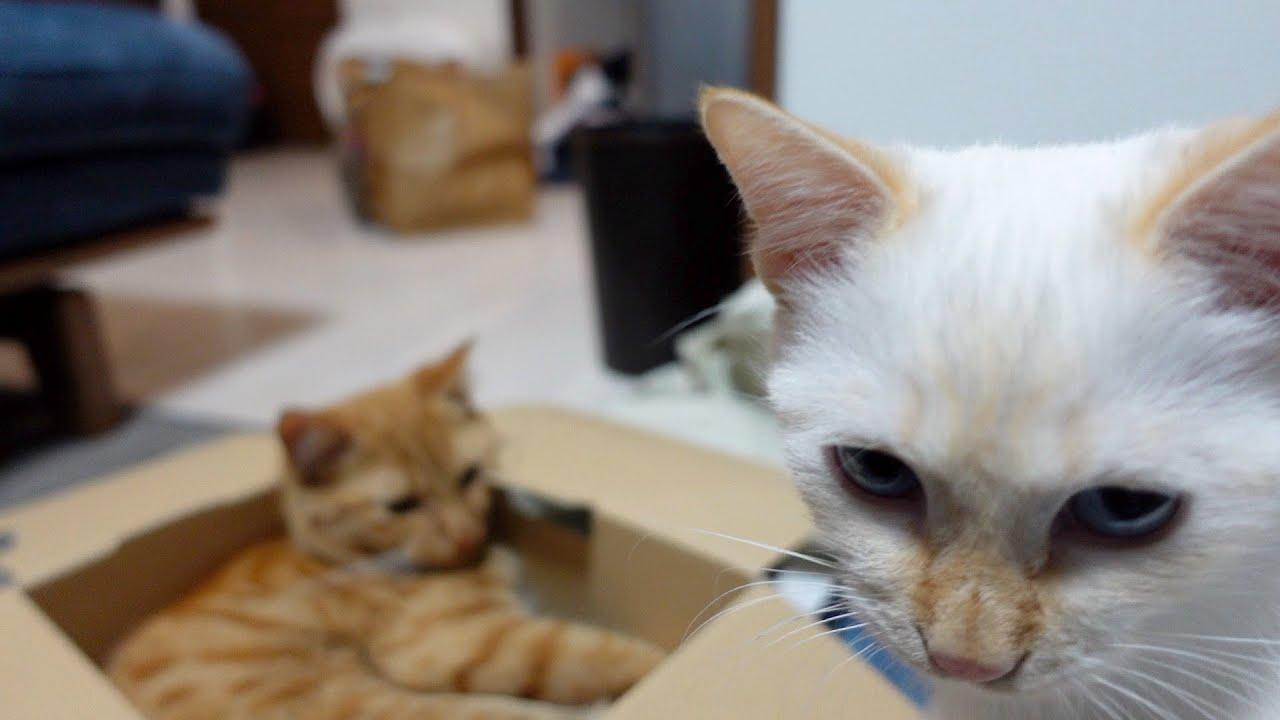 【ヤクザ猫】トラ吉に不満爆発!?