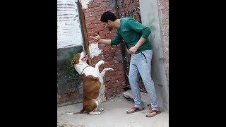 تدريب كلاب-sit-down-stay-heel-bark -die-pull-catch-move-back-up
