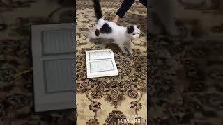 видео Отношение к кошкам в Исламе, Пророк Муххамад и кошки