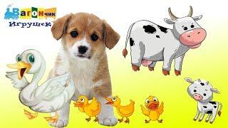 Животные и их дети - Развивающее видео для детей