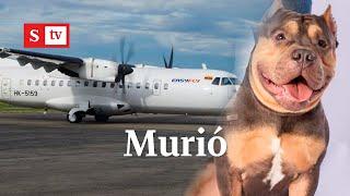 Mujer denuncia que su perro murió en la bodega de un avión de Easyfly | Semana Tv