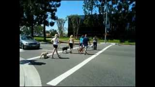 Dog Training Classes In Orange County